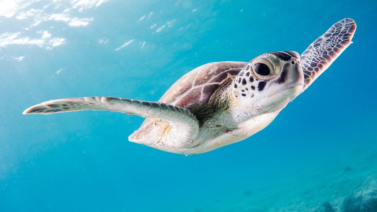 vida marina cozumel