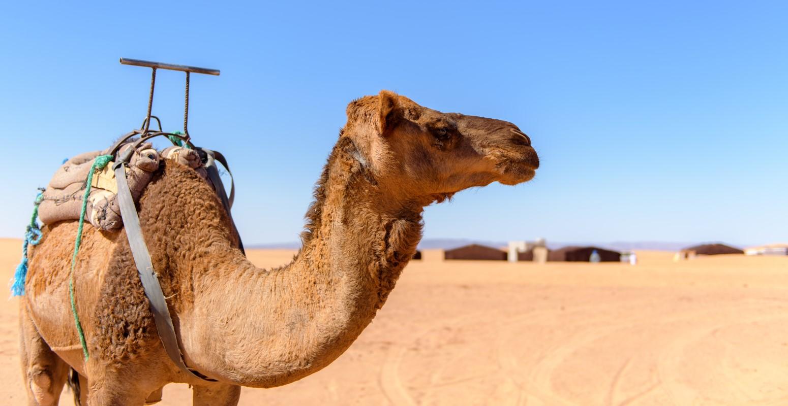 vacaciones monoparentales marruecos reyes magos