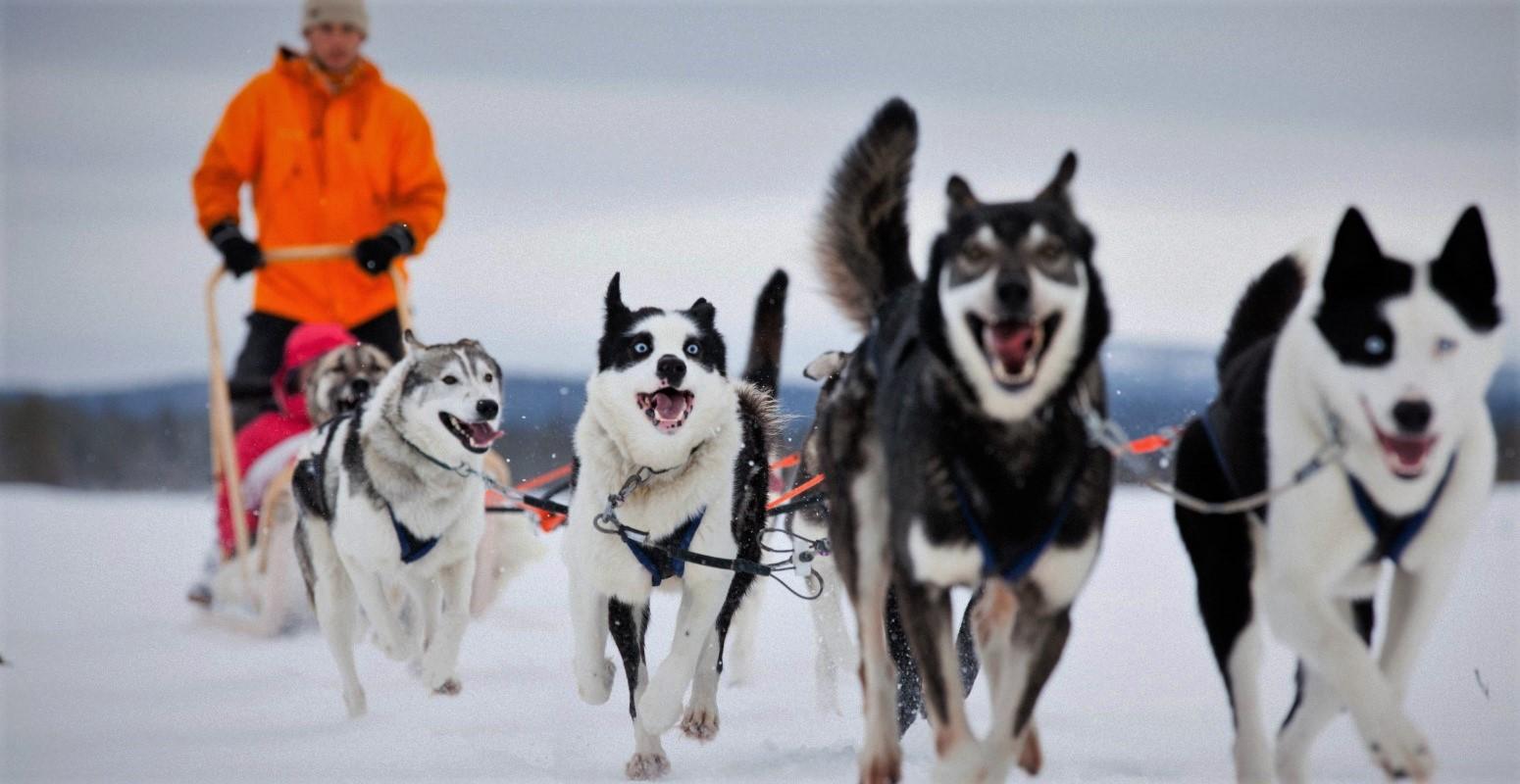 salla huskies navidad viaje laponia