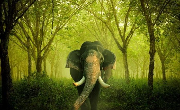 elefante_paseos_bali