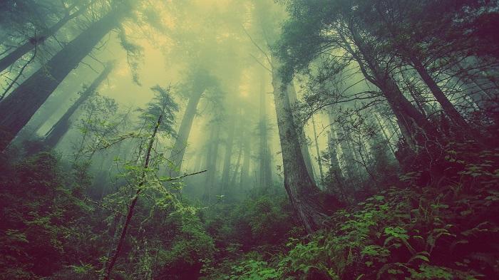 el_bosque_encantado