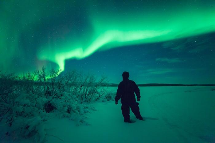 laponia borealis700