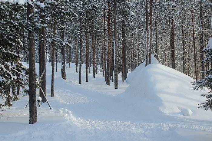 laponia nieve borque