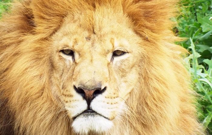 viajes familias monoparentales buscando al rey leon