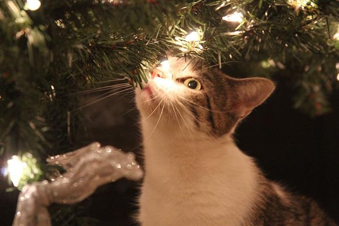 gato-navidad-velayos