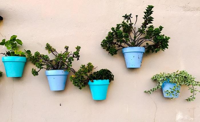 plantas-cadiz-azul